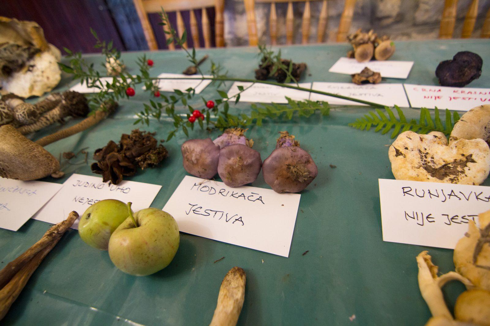 ISTRIAN AGRITOURISM OPEN DOOR DAYS IN SVETI MARTIN NEAR LABIN